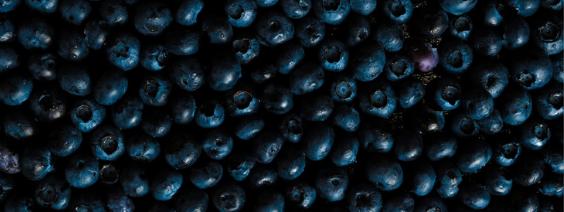 Blåbær-creme